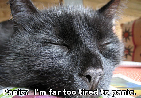 cat_tired_panic